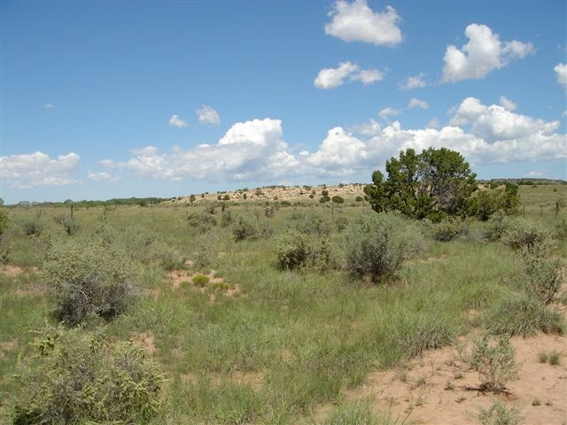MILLER - GALISTEO PHOTOGRAPHS 8